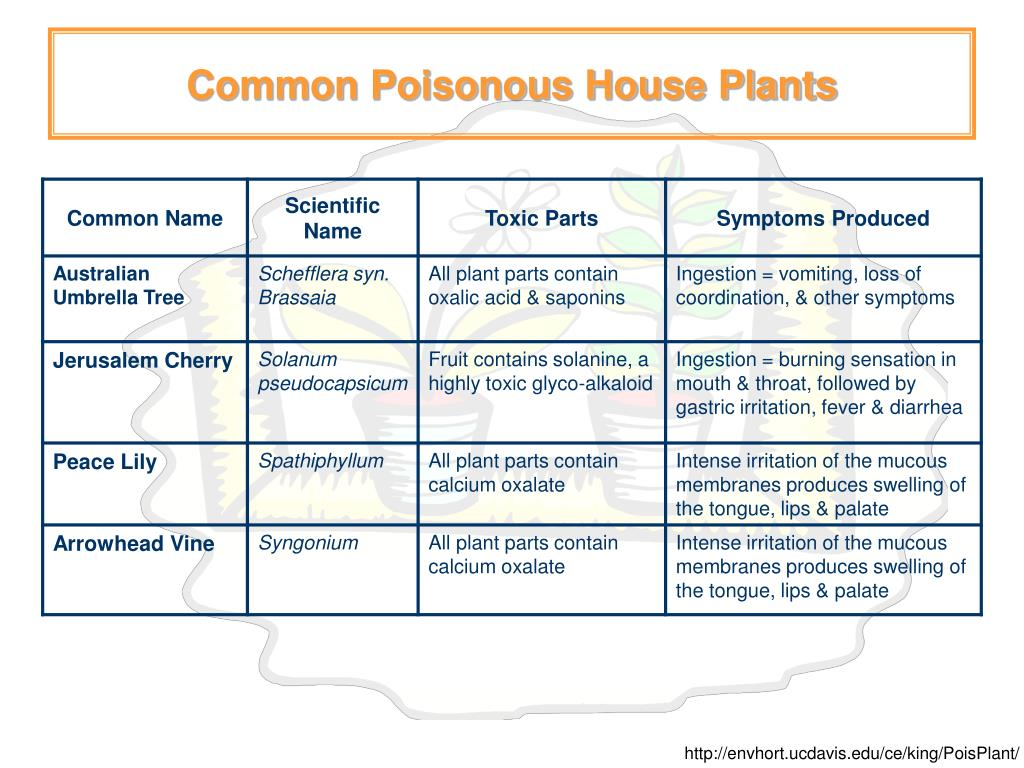 Common Poisonous House Plants