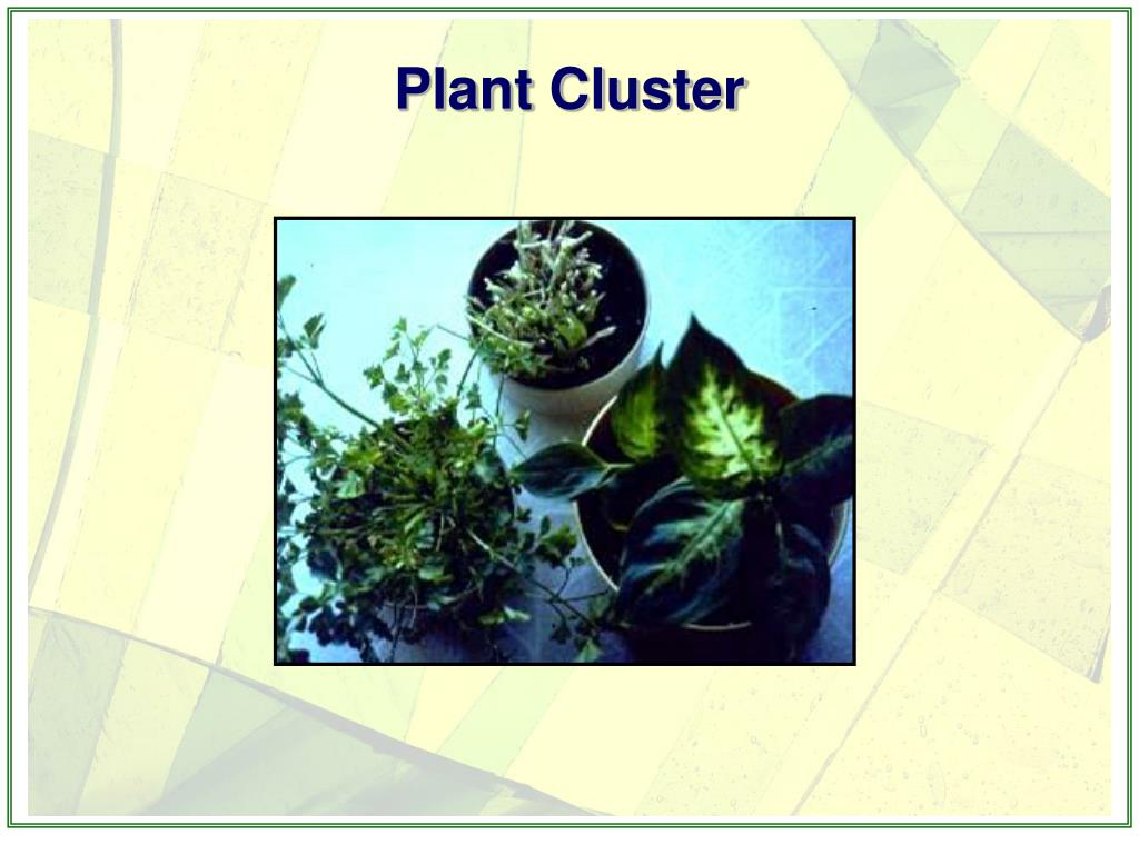 Plant Cluster