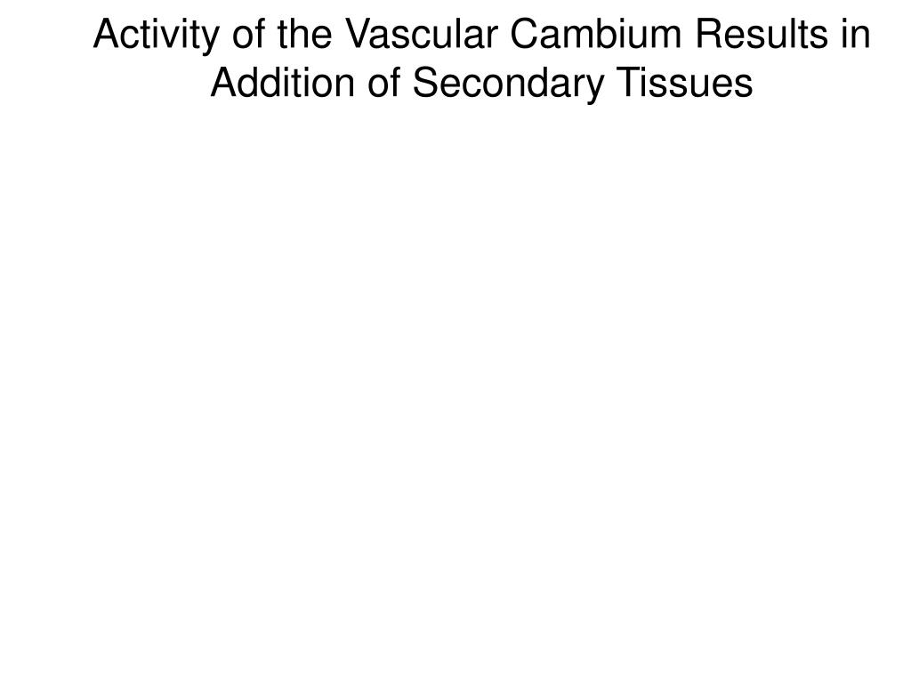 Activity of the Vascular Cambium Results in Addition of Secondary Tissues