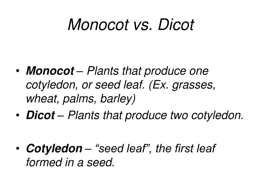 Monocot vs. Dicot