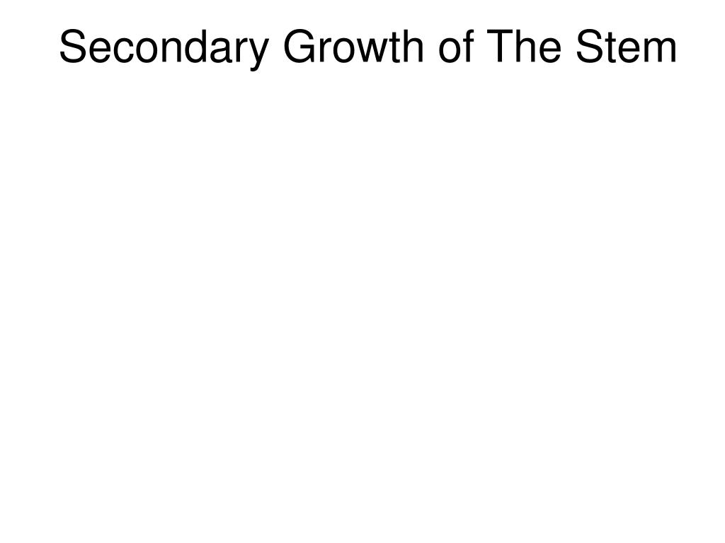 Secondary Growth of The Stem