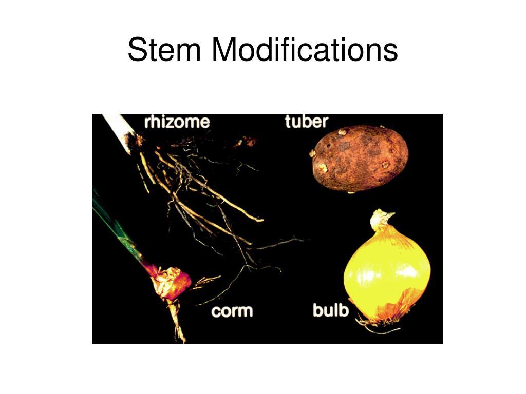 Stem Modifications