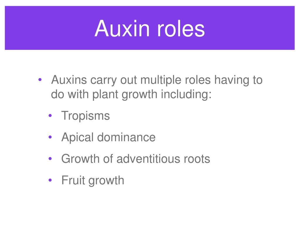Auxin roles