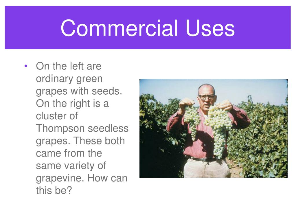 Commercial Uses