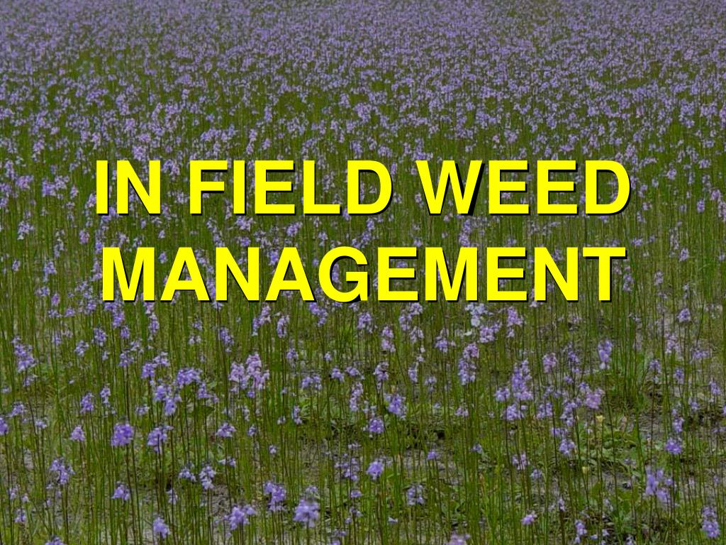 IN FIELD WEED