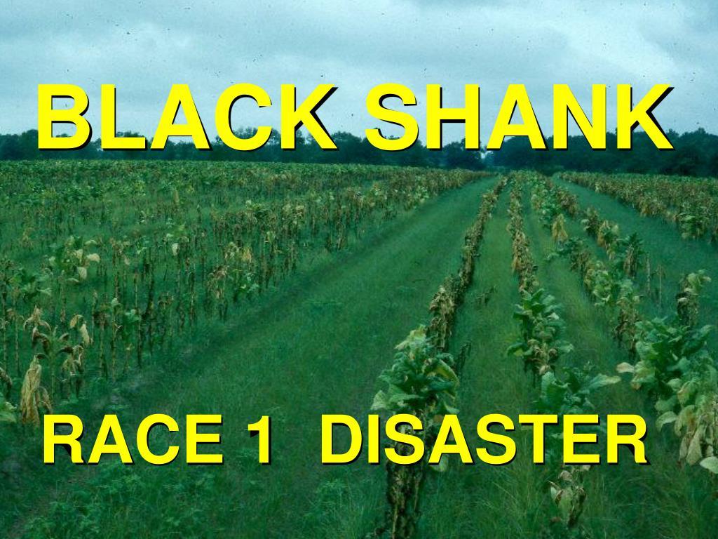 BLACK SHANK