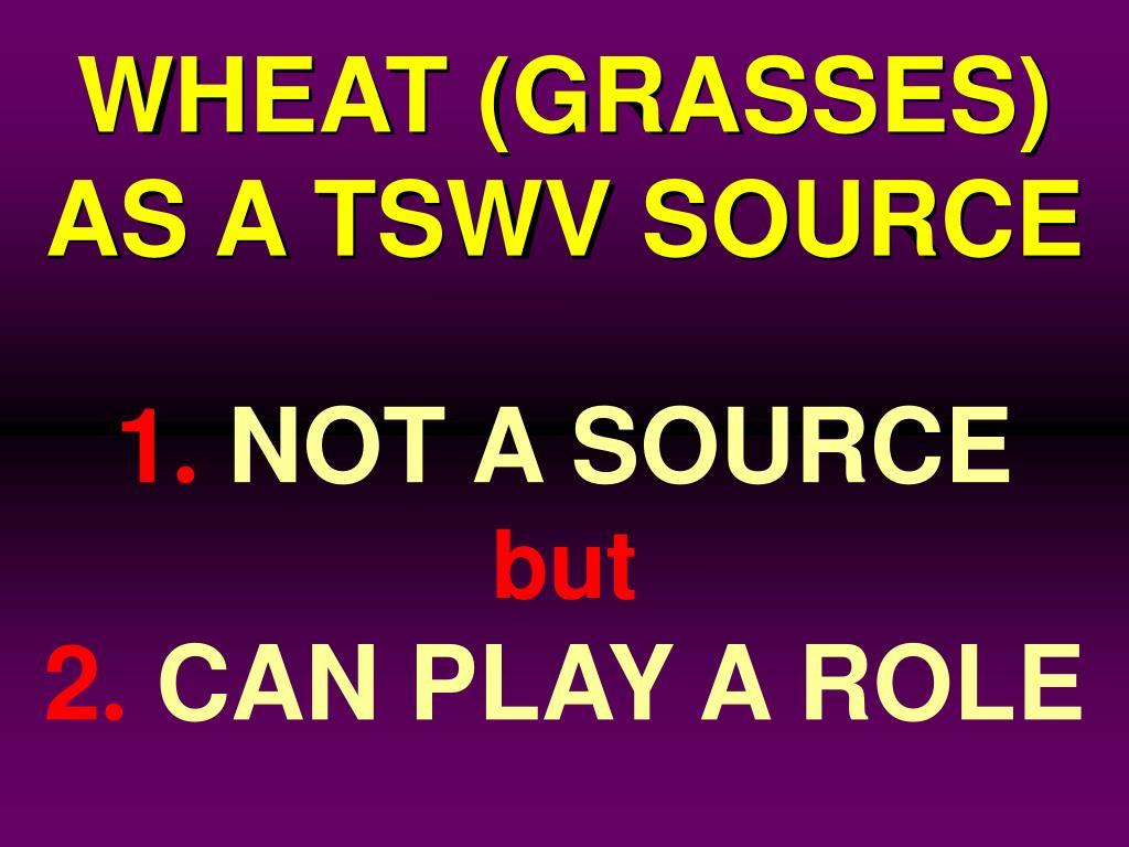 WHEAT (GRASSES)