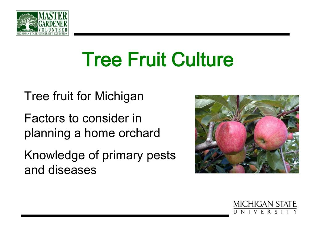 Tree Fruit Culture