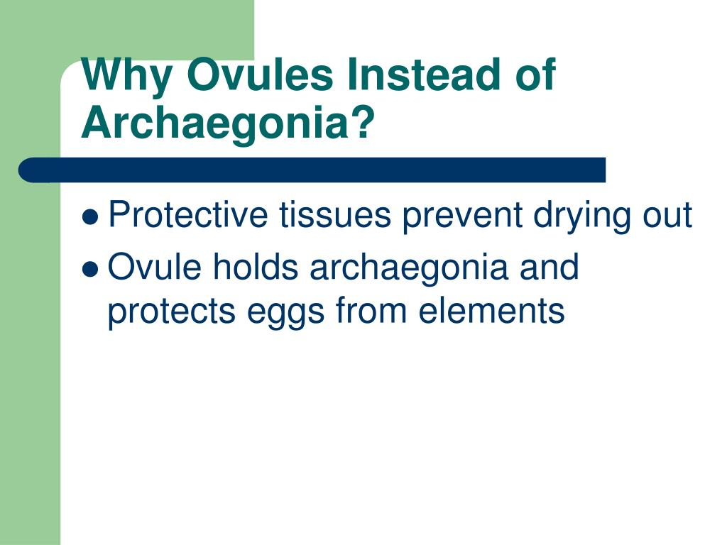 Why Ovules Instead of Archaegonia?