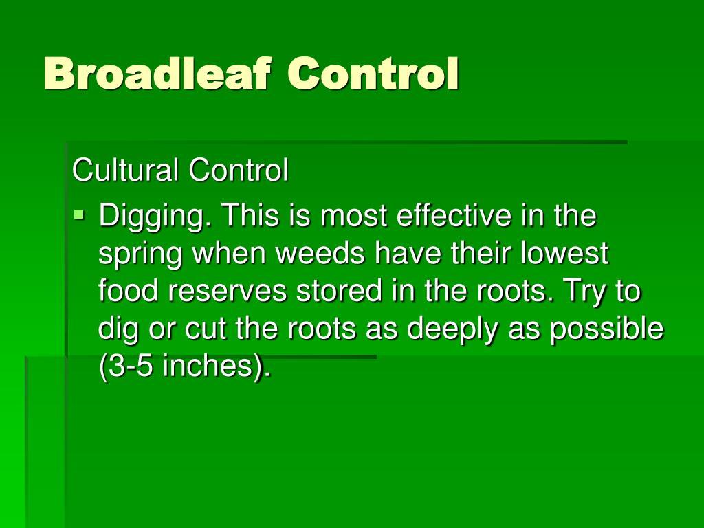 Broadleaf Control