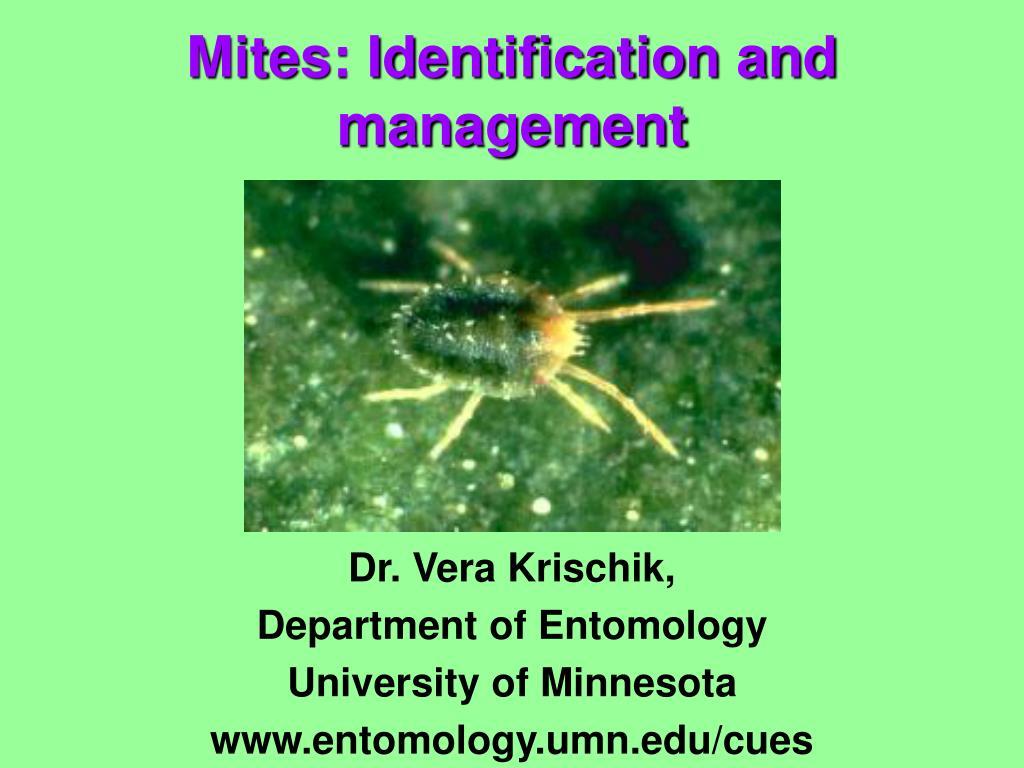 Dr. Vera Krischik,