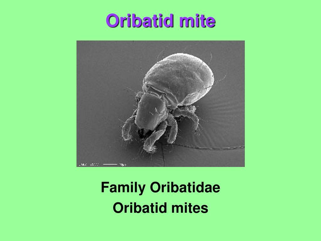 Family Oribatidae