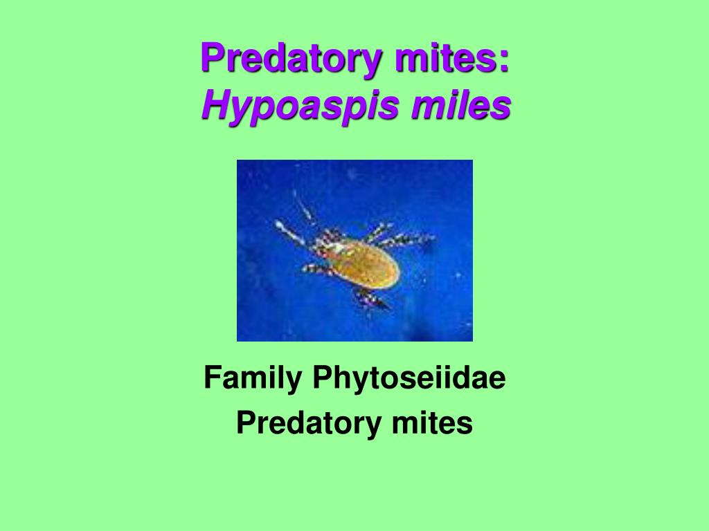Family Phytoseiidae