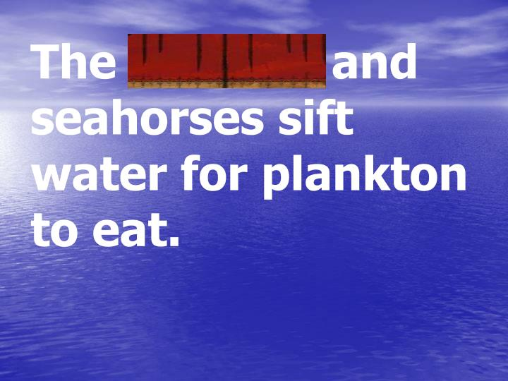 The mussels and seahorses sift water for plankton to eat.
