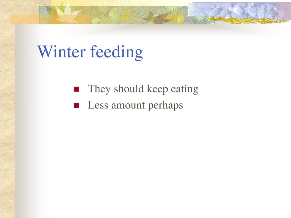 Winter feeding