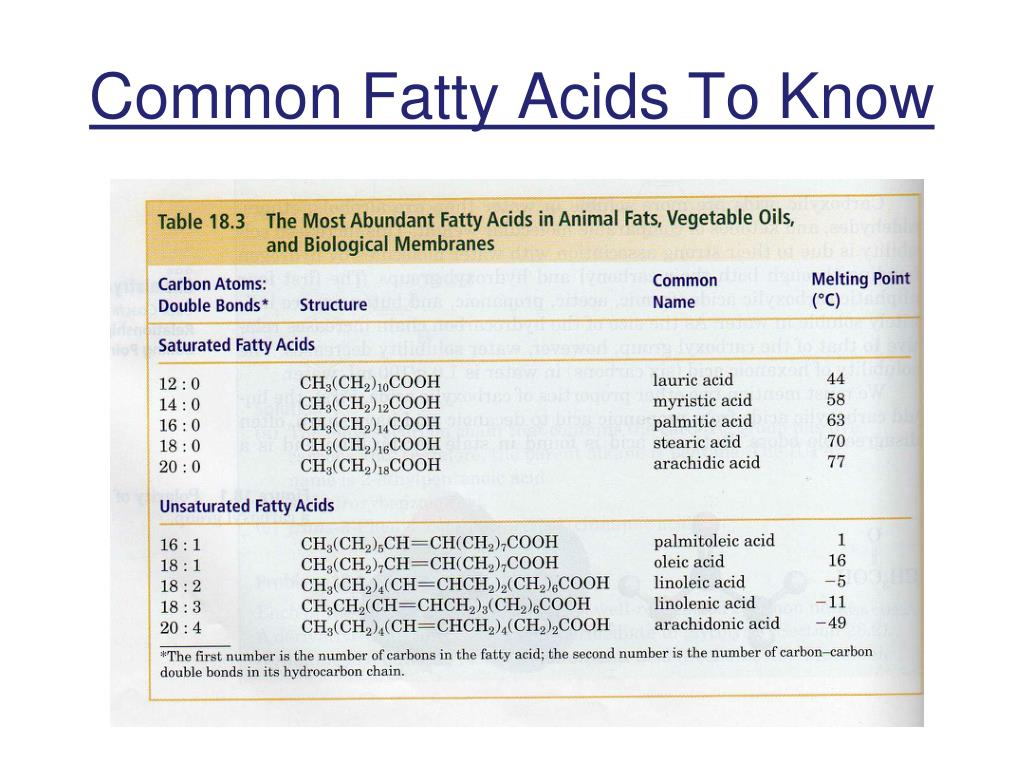 Common Fatty Acids To Know