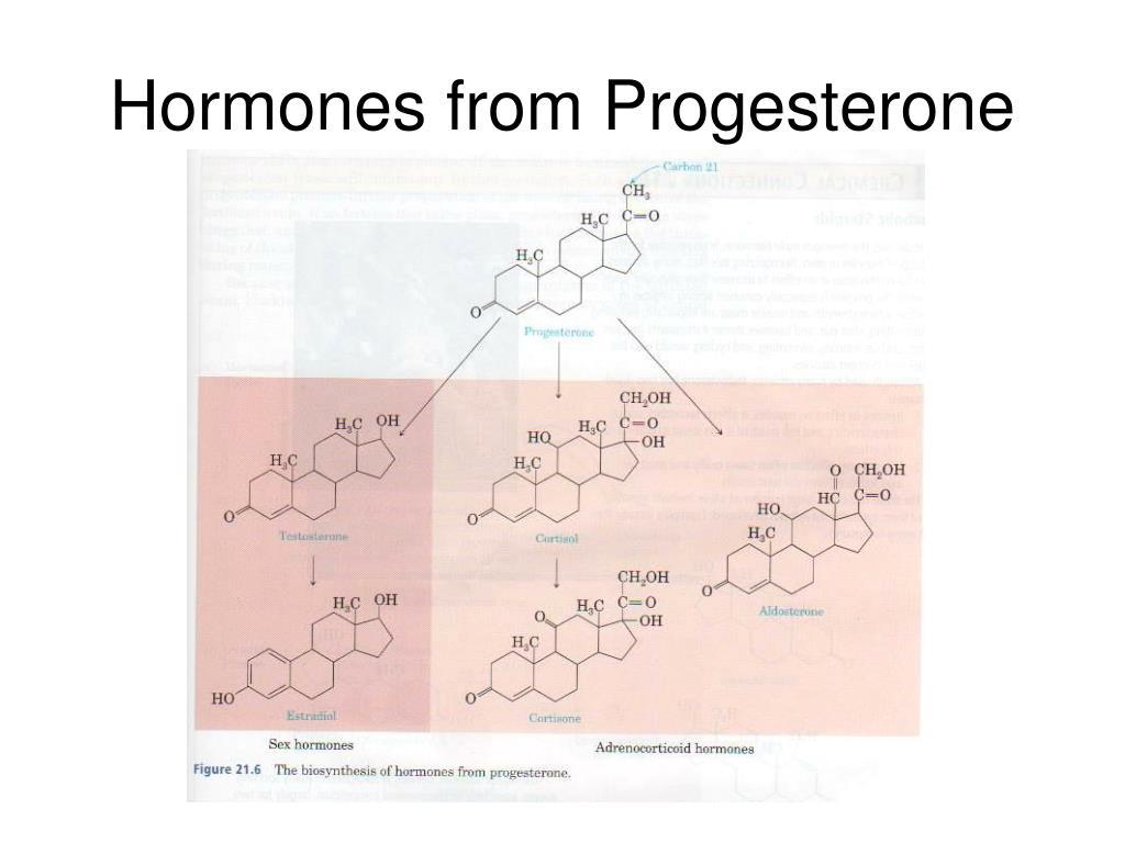 Hormones from Progesterone