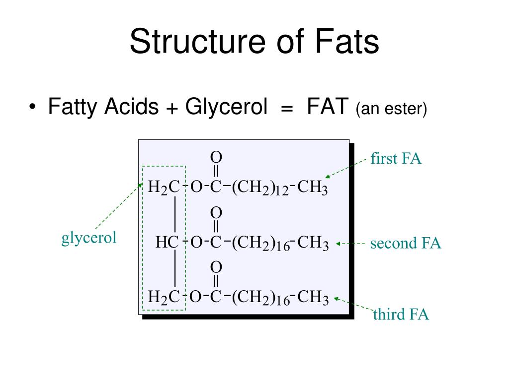 Structure of Fats