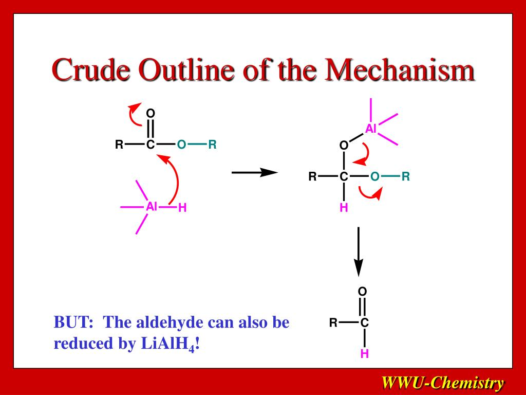 Crude Outline of the Mechanism