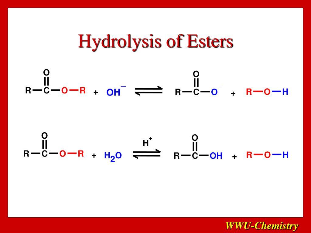 Hydrolysis of Esters