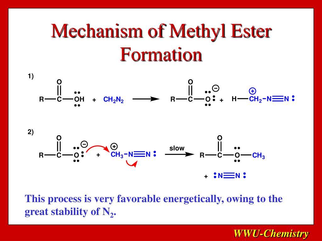 Mechanism of Methyl Ester Formation