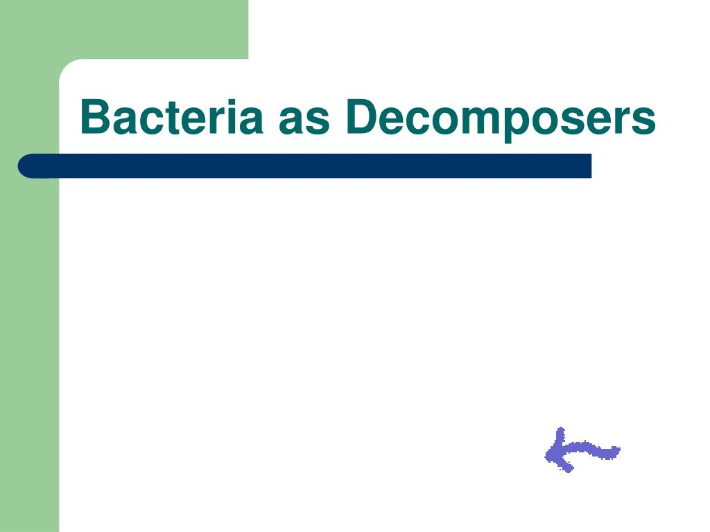 Bacteria as Decomposers