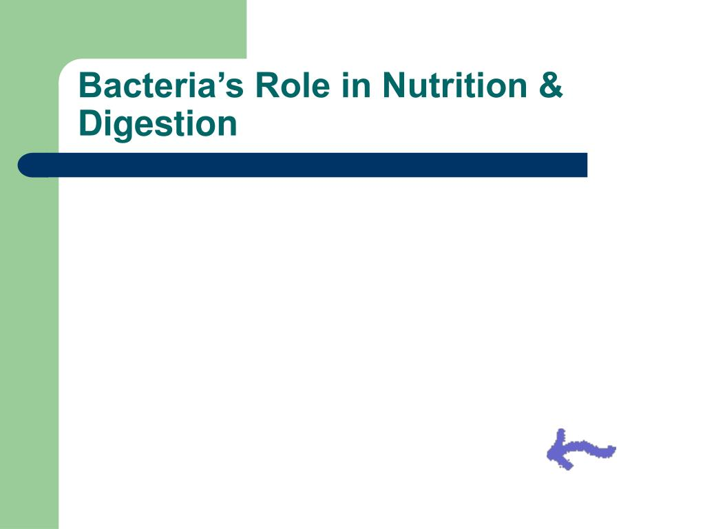 Bacteria's Role in Nutrition & Digestion