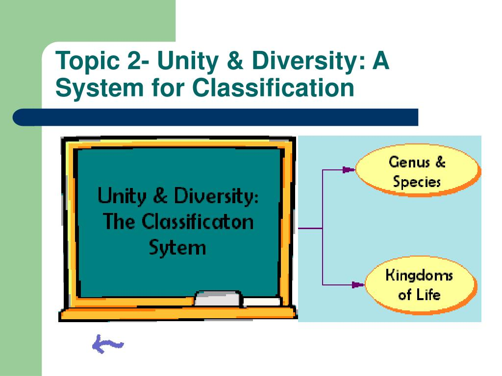 Topic 2- Unity & Diversity: A System for Classification