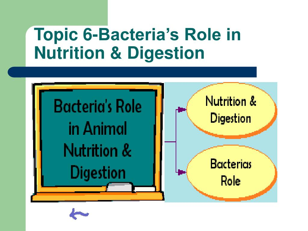 Topic 6-Bacteria's Role in Nutrition & Digestion