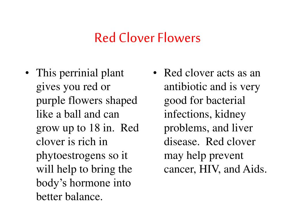 This perrinial plant gives you red or purple flowers shaped like a ball and can grow up to 18 in.  Red clover is rich in phytoestrogens so it will help to bring the body's hormone into better balance.