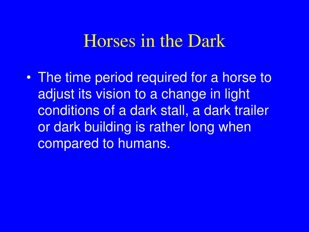 Horses in the Dark