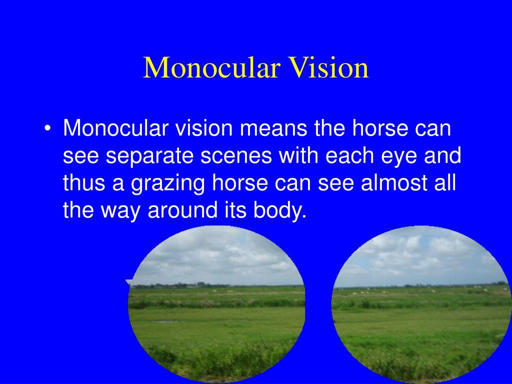 Monocular Vision