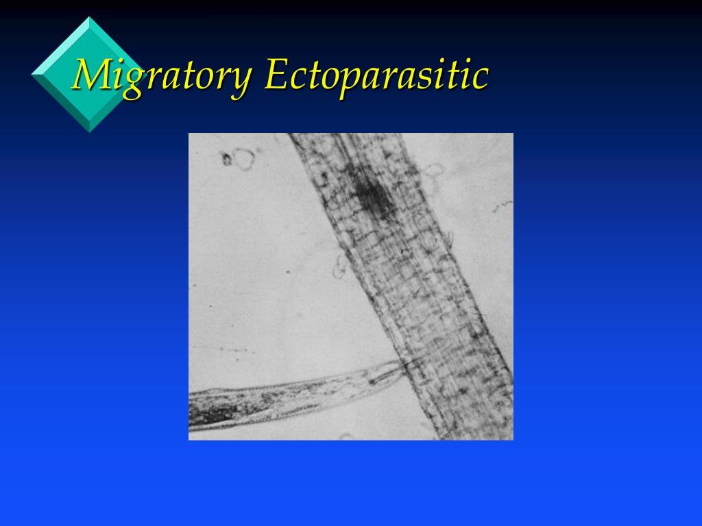 Migratory Ectoparasitic