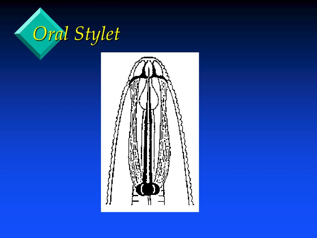 Oral Stylet