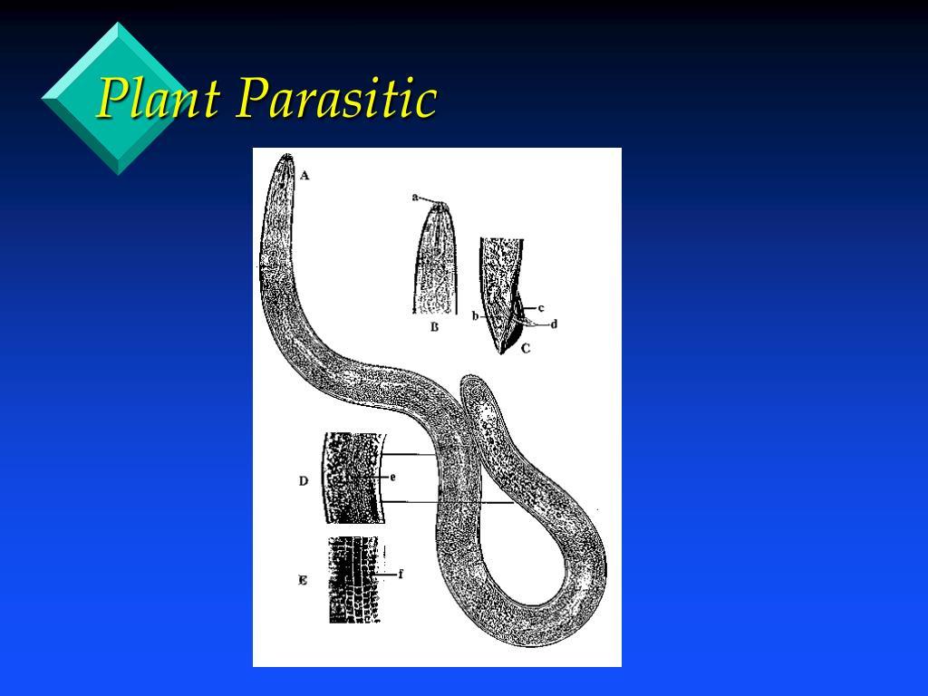 Plant Parasitic