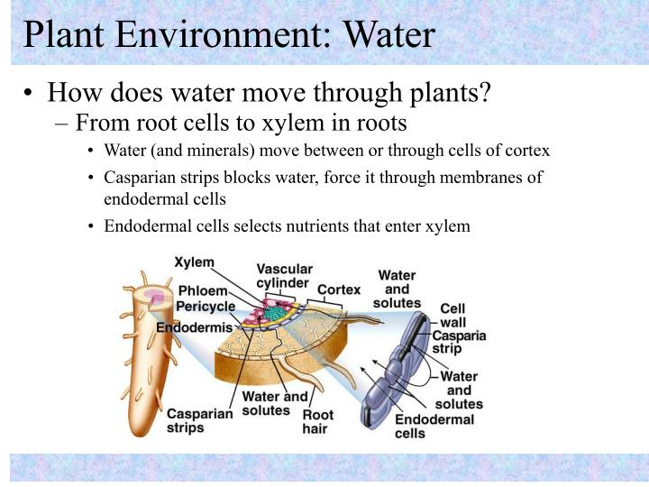 Plant environment water3