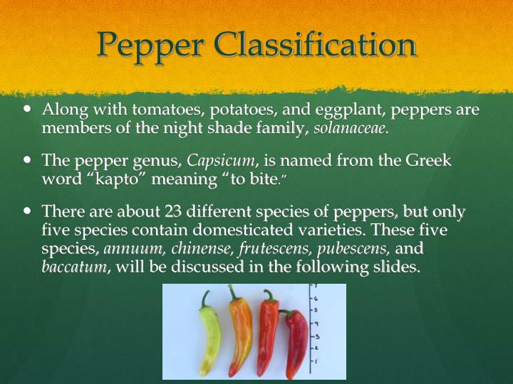 Pepper classification