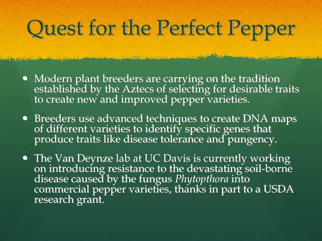 Quest for the Perfect Pepper