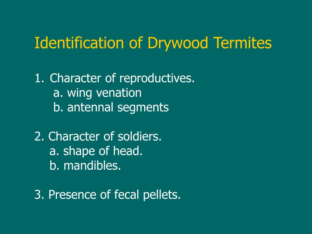 Identification of Drywood Termites