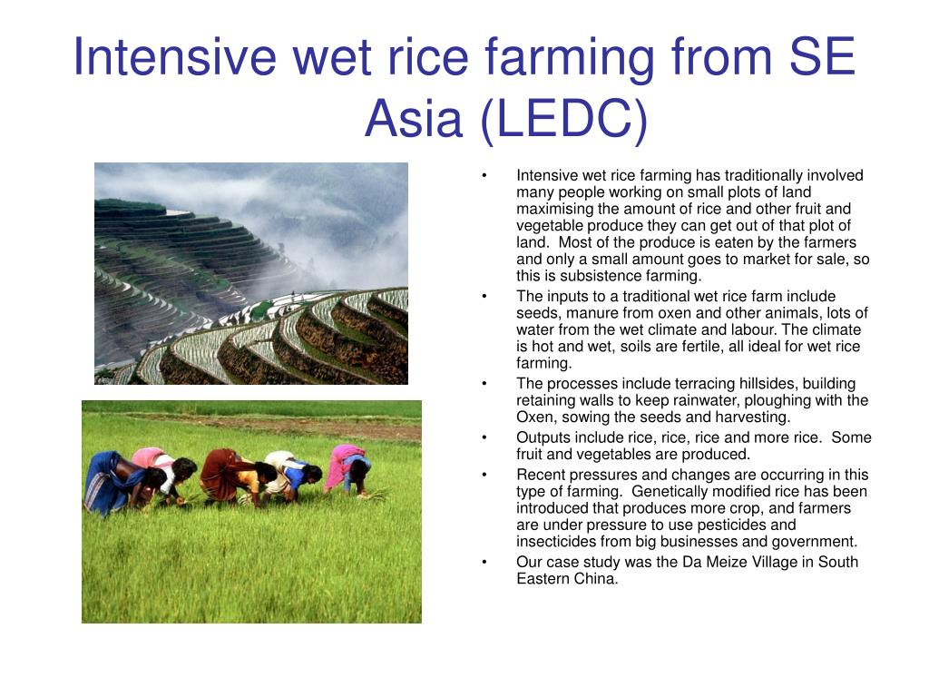 Intensive wet rice farming from SE Asia (LEDC)