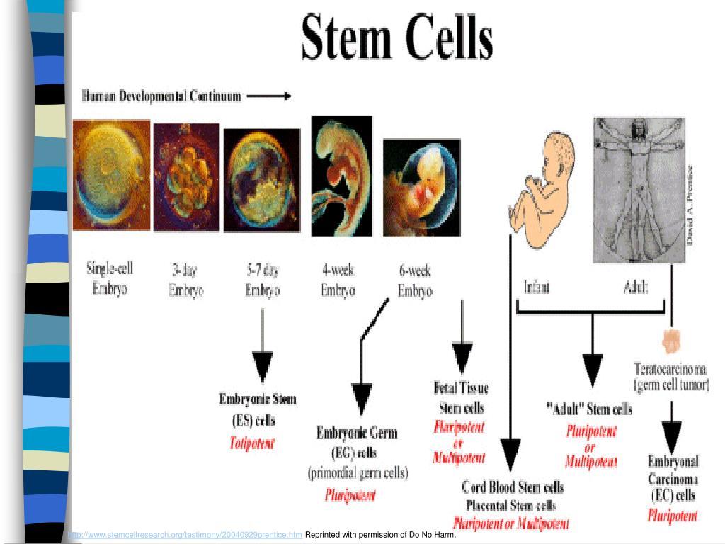 http://www.stemcellresearch.org/testimony/20040929prentice.htm