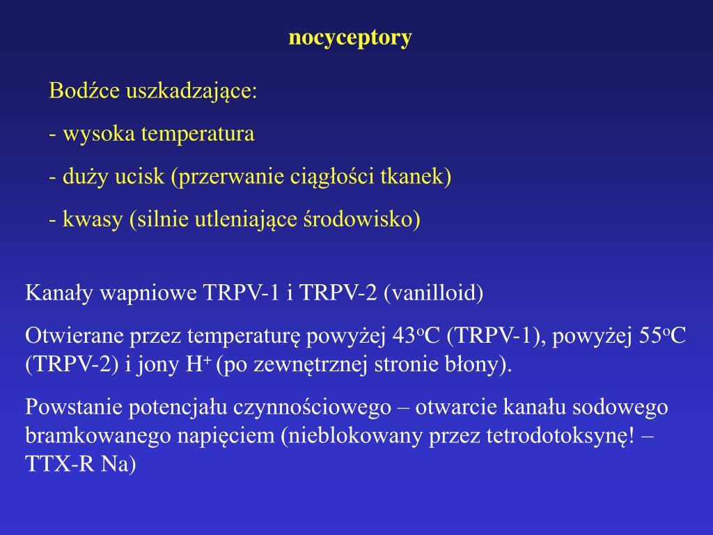nocyceptory