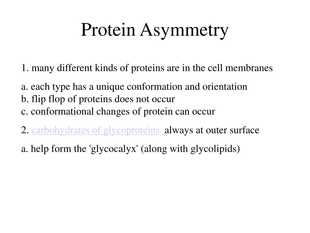 Protein Asymmetry
