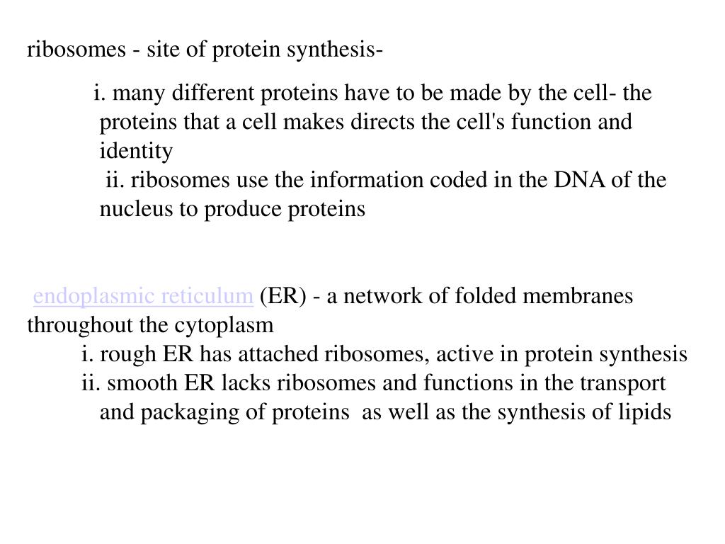 ribosomes - site of protein synthesis-