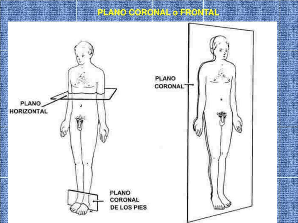 PLANO CORONAL o FRONTAL