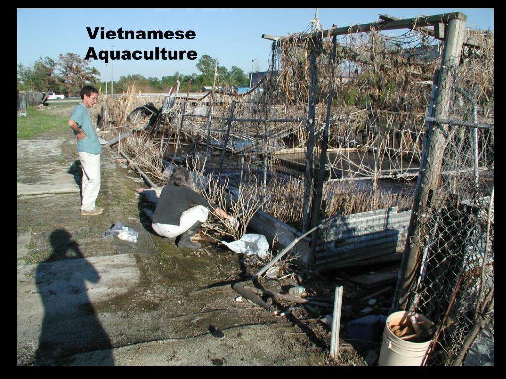 Vietnamese Aquaculture