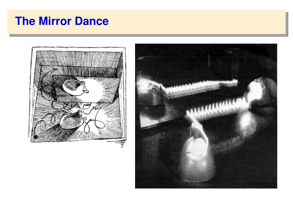 The Mirror Dance