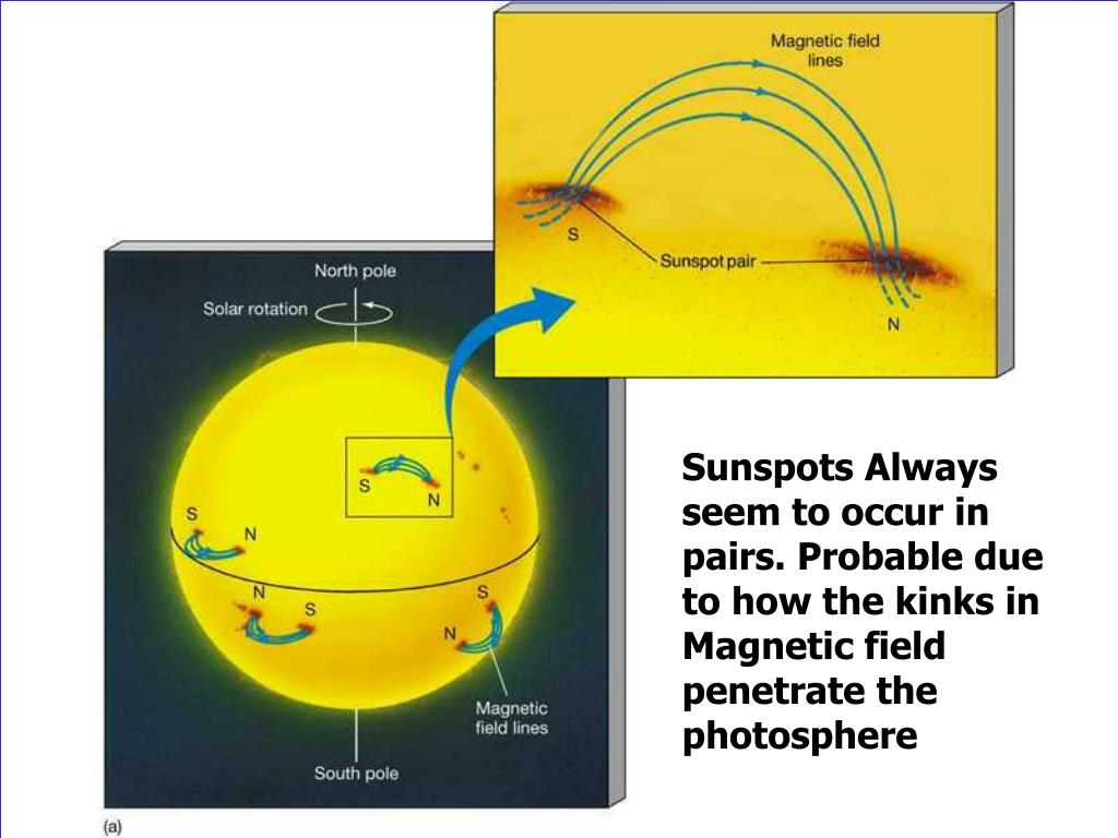 Sunspots Always seem to occur in pairs. Probable due to how the kinks in Magnetic field penetrate the photosphere