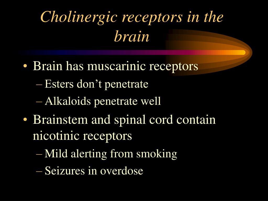 Cholinergic receptors in the brain