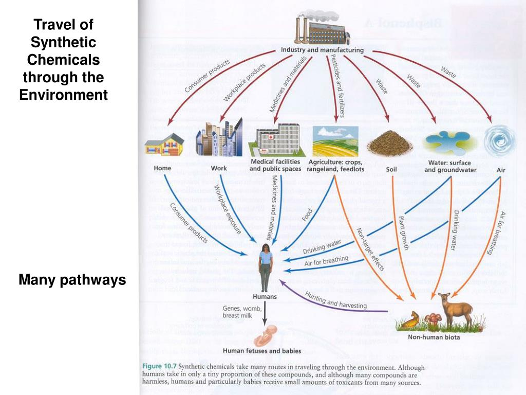 Travel of Synthetic Chemicals through the Environment